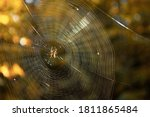 Close Up Of Spider Weaving Web...