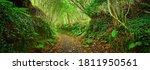 Footpath In A Green Oak Tree...