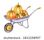 Watercolor Hand Drawn Pumpkins...