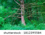 A Dense Green Forest With A...