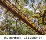 Ground View Of Canopy Walk In...