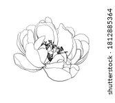 peony flower. line drawing....   Shutterstock .eps vector #1812885364