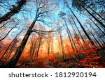 Autumn Scenery In A Deciduous...