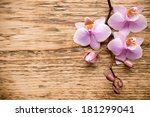 pink orchid on a wooden... | Shutterstock . vector #181299041