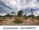 Landscape At Mesa Verde...