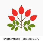 rose hip fruits. autumn vector... | Shutterstock .eps vector #1813019677