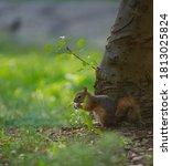 Caucasian Squirrel Eating A...
