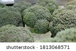 Broccoli Is A Vegetable That...