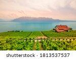 Lavaux Vineyard  A Unesco World ...