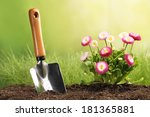 Garden Tool And Flowers In The...