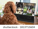 Small photo of Back view of dog talking to dog friends in video conference. Group of dogs having an online meeting in video call using a laptop. Labradoodle and boxer dog chatting online. Pets using a computer.