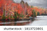 Colorful Autumn Trees By The...