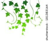 vector illustration of green ivy | Shutterstock .eps vector #181383164