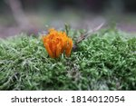 Close Up Of A Coral Mushroom On ...