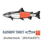 vector rainbow trout fish...   Shutterstock .eps vector #1814163371