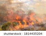 Fire Rages In Palmetto Prairie...
