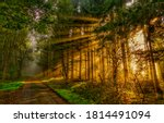Forest Road In Autumn Sunbeams. ...