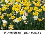 Flowers In Keukenhof In The ...
