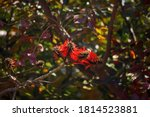 A Cluster Of Coral Flowers With ...
