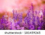 beautiful spring background... | Shutterstock . vector #181459265