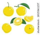 yuzu slice  half cut yuzu and...   Shutterstock .eps vector #1815361157