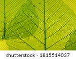 closeup transparent green... | Shutterstock . vector #1815514037
