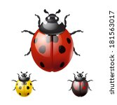 ladybug isolated on white... | Shutterstock .eps vector #181563017