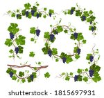 Grapevine Climbing Plant With...
