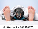 Owner And Pet Sleep Together In ...