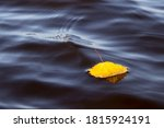 Autumn. Yellow Leaf In Water....