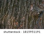 Real Thick Tree Bark Covered...