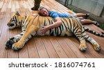 Young Man Hugging A Big Tiger...