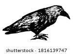 Standing Raven Doodle. Simple...