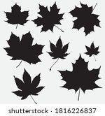 canadian maple leaf bundle... | Shutterstock .eps vector #1816226837