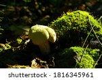 White Small Mushroom Between...