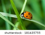Journey Of Lonely Ladybird In...