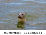 Seals In Its Natural Habitat In ...