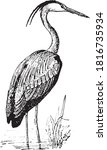 heron bird  from the dictionary ...   Shutterstock .eps vector #1816735934