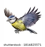 Tit  Parus  Flying  Realistic...