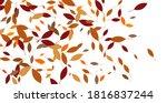 leaves. throw autumn leaves.... | Shutterstock .eps vector #1816837244