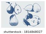 set of fresh pear fruit ... | Shutterstock .eps vector #1816868027
