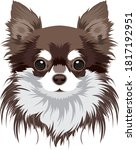 chihuahua dog vector portrait... | Shutterstock .eps vector #1817192951