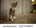 Ashy Tricolor Cat Relax In...