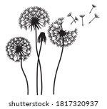 Illustration Of Dandelion With...