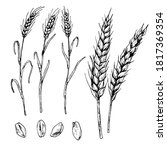 hand drawn vector illustration... | Shutterstock .eps vector #1817369354