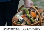 Basket Of Fresh Autumn...