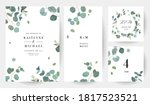 herbal eucalyptus selection... | Shutterstock .eps vector #1817523521