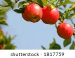 3 Red Apples On A Tree