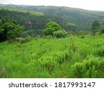 Lush Green Grass And Wild...