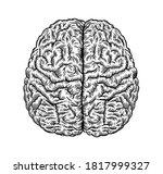 human brain for medical ... | Shutterstock .eps vector #1817999327